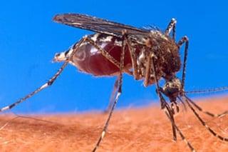 mosquito-1.jpg