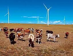 Image result for wind turbine longhorn cattle